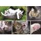 Collage - Die Katzen