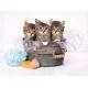 Kätzchen und Seife