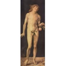 Adam - Albrecht Dürer