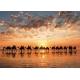 Golden sunset on Cable Beach - Australia