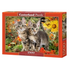 Kitten Buddies