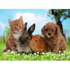 Haustierfreunde