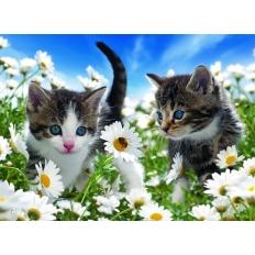 Süsse Kätzchen