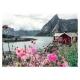 Reine - Lofoten - Norwegen