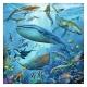 Tierwelt des Ozeans