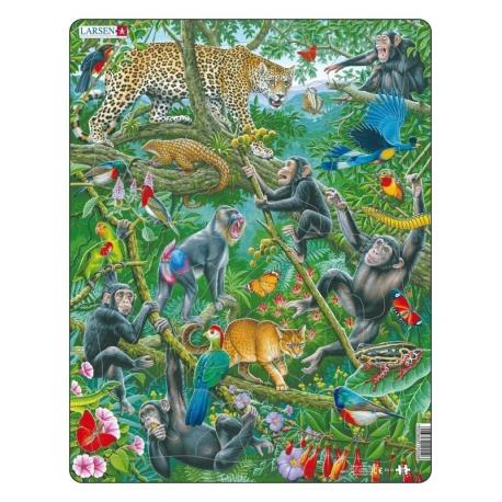 A Dense African Rainforest