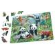Panda Bear Family on a China Mountain Plateau