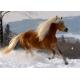Galoppierender Haflinger -  Magie der Pferde
