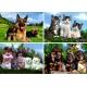 Tierfamilien Hunde und Katzen