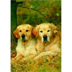 Labrador Hundepaar