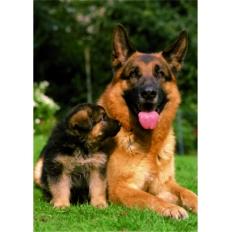 Schäferhund mit Nachwuchs