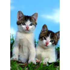 Kätzchen - Muss das sein?