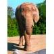 Elefant - Einen Fuss vor den anderen