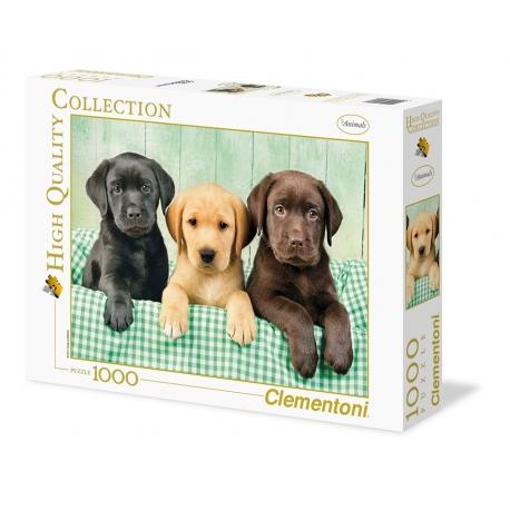 Drei Labradore