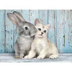 Katze & Hase