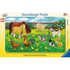 Bauernhoftiere auf der Wiese