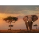 Elefant in Masai Mara National Park