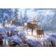 Winter mountain light